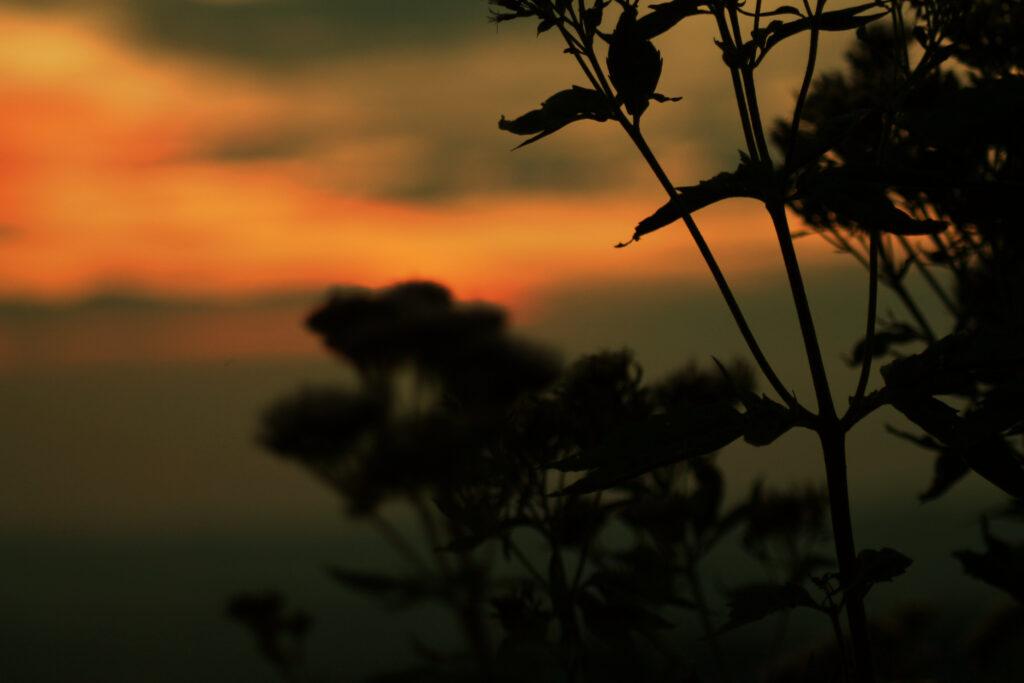 Sonnenuntergang mit Strauch im Vordergrund