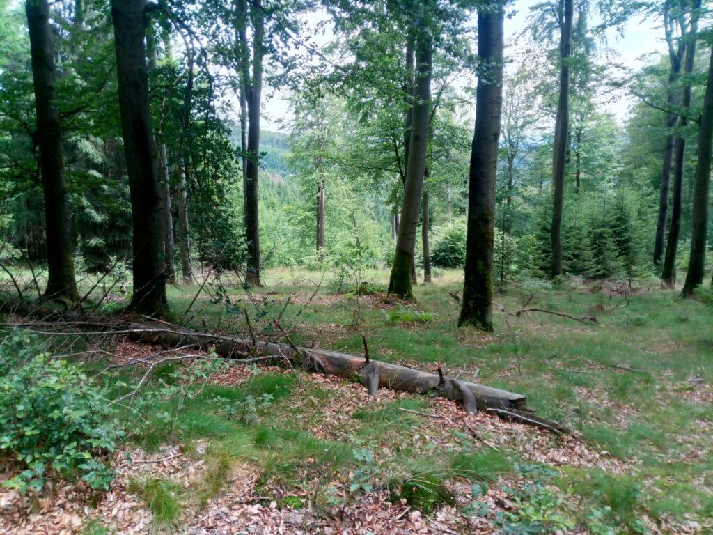 Blick in den Wald auf dem Weg zwischen Potsdamer Platz und Margaretenstein