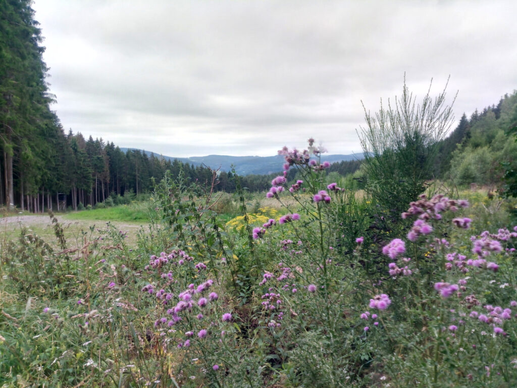 Blick ins Tal nach dem Langeneier Kirchberg