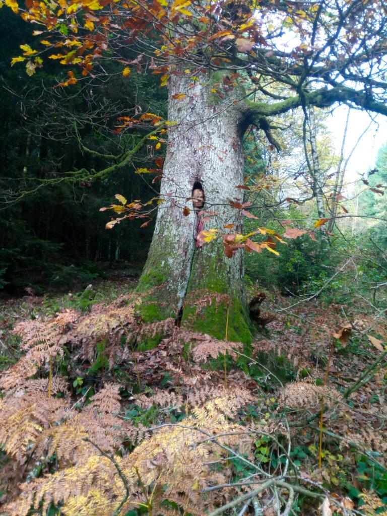 Schrumpfkopf in Baumöffnung