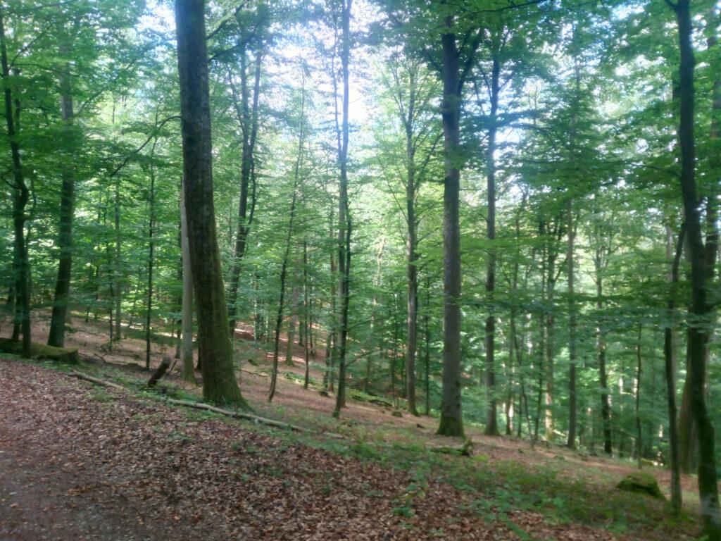Naturwaldzelle auf dem Rosenberg