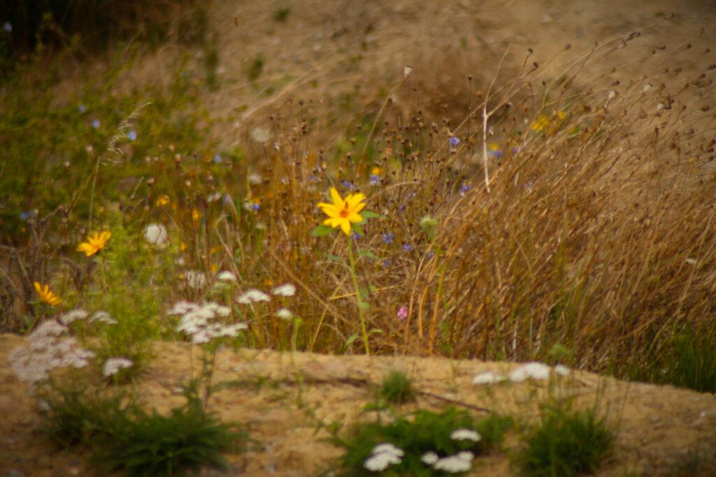 Blumen im Bikepark Veischedetal