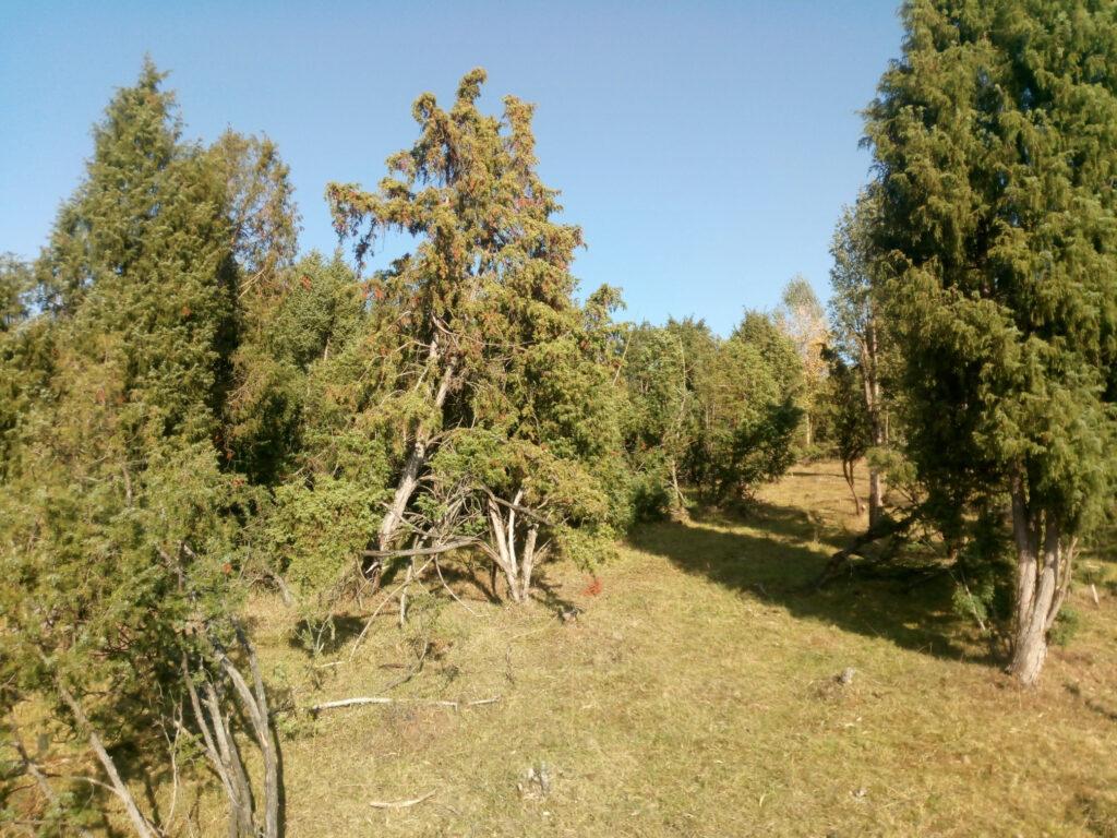 Naturschutzgebiet Melbecketal und Rübenkamp