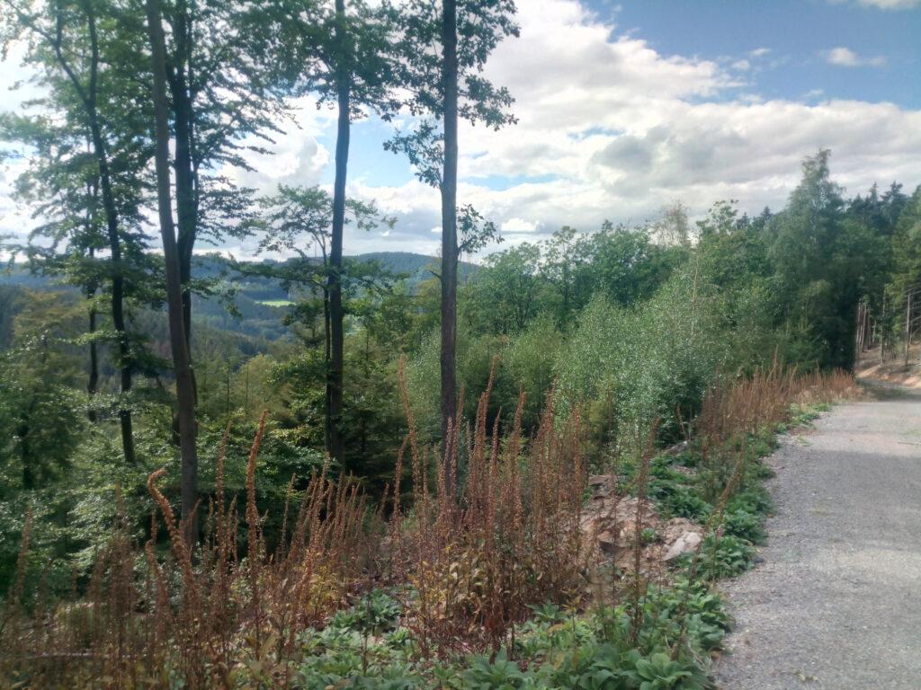 Shinrin-Yoku - Blick in den Wald in der Nähe von Kirchhundem-Albaum