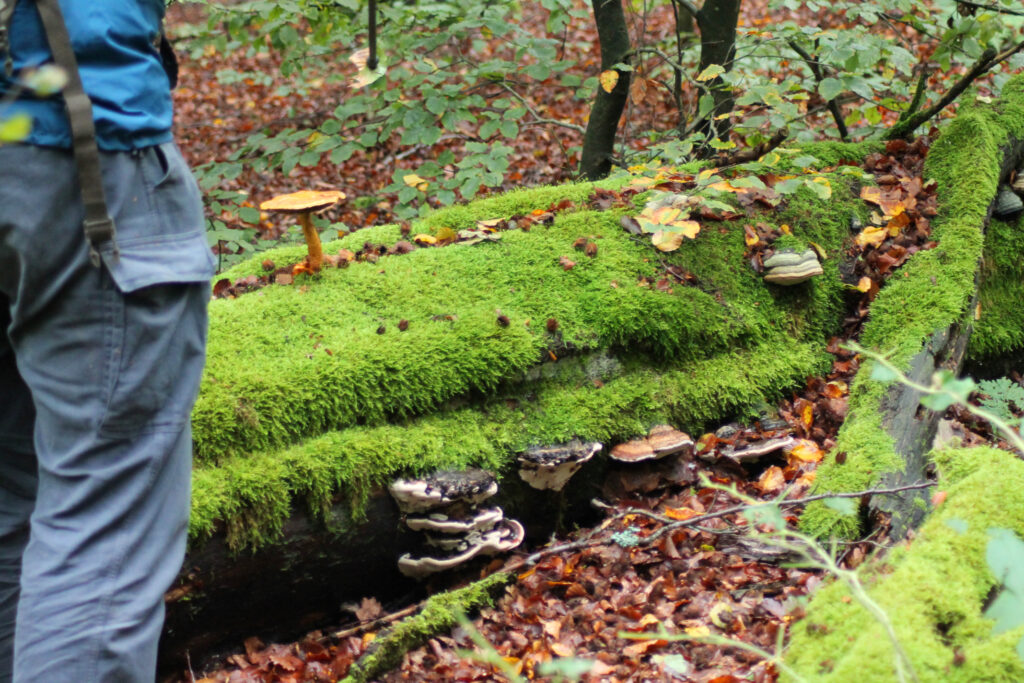Liegendes Totholz mit Pilzen