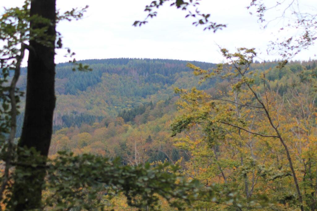 Wald aus der Ferne
