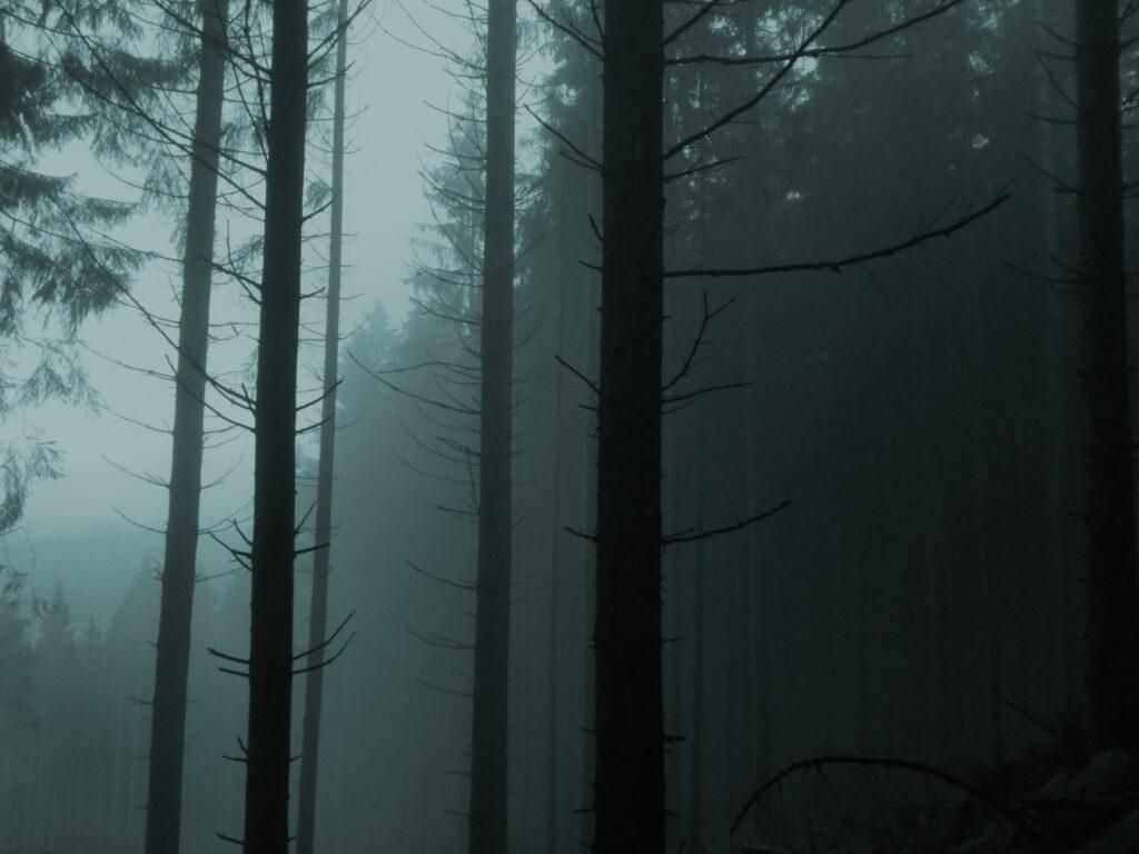Orientierungslos im nebligen Fichtenwald