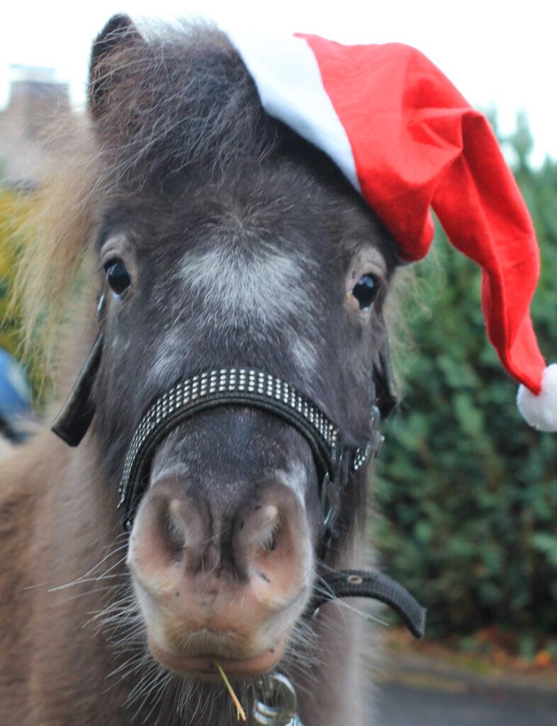 Pony mit Weihnachtsmütze