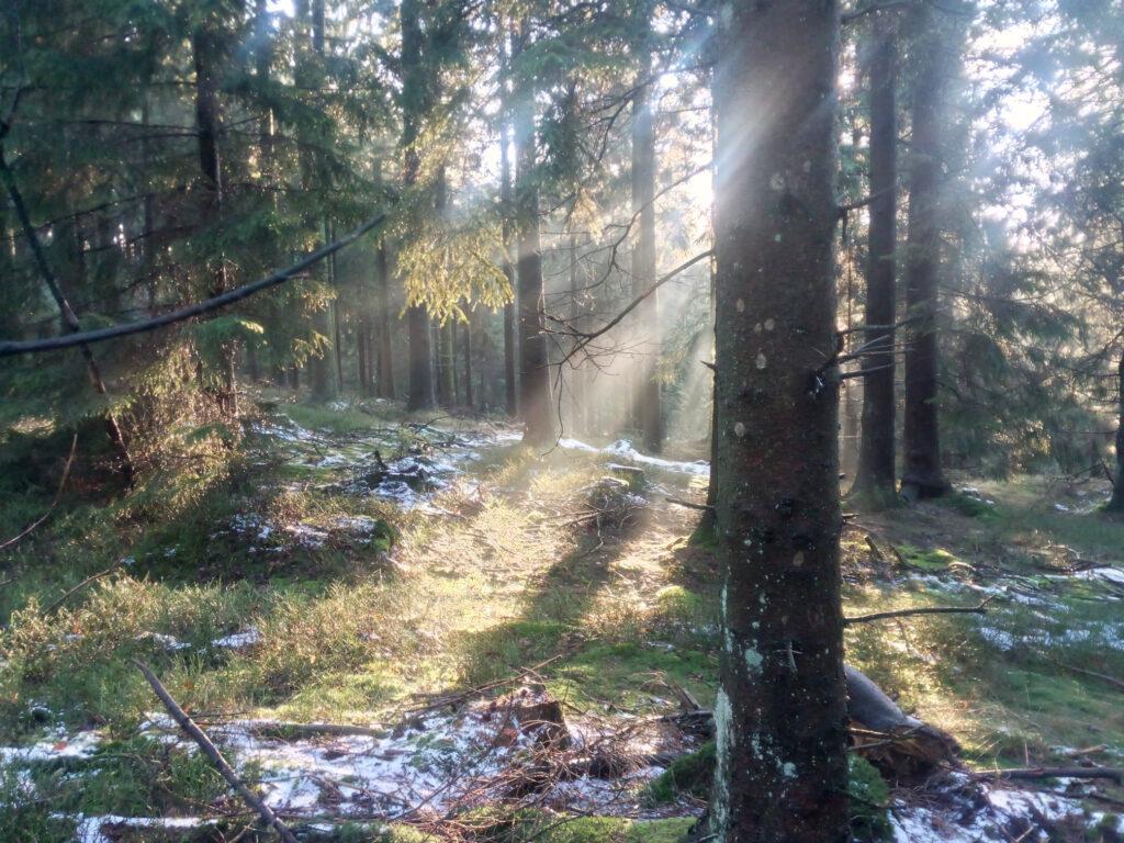 Sonnenstrahlen durch den Wald im Winter