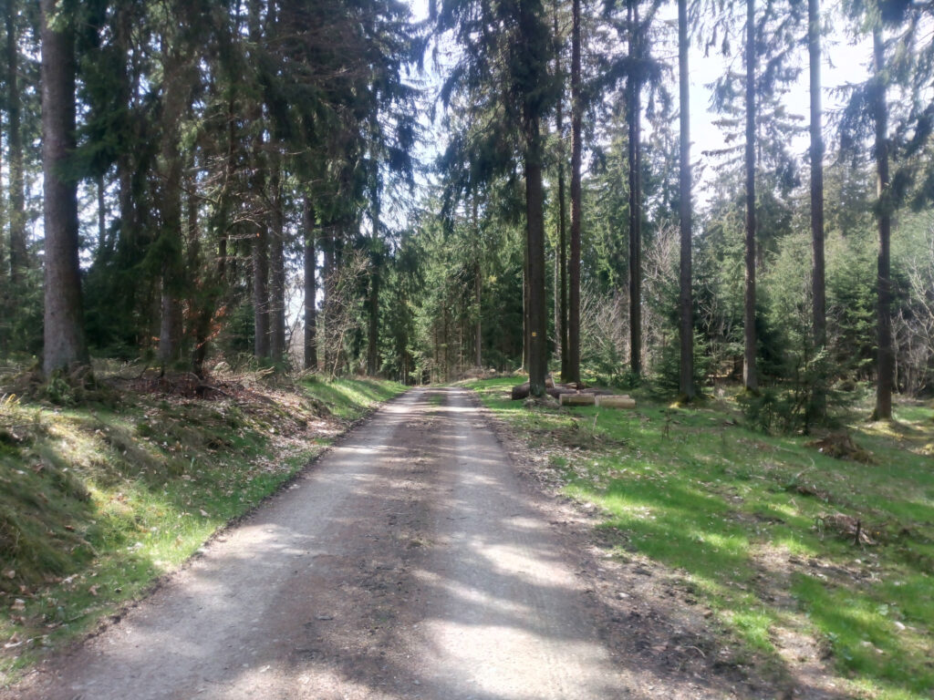Waldweg X5
