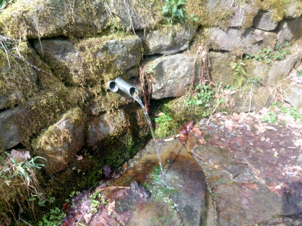 Quelle zur Waldesstille