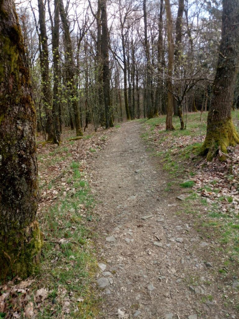 Single-Trail sieht aus wie ein breiter Weg