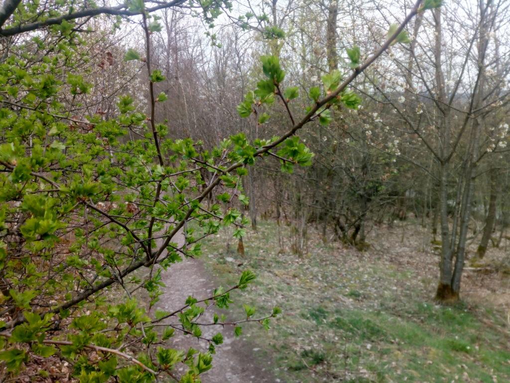 Trail auf dem X5 zwischen Dreis-Tiefenbach und Siegen