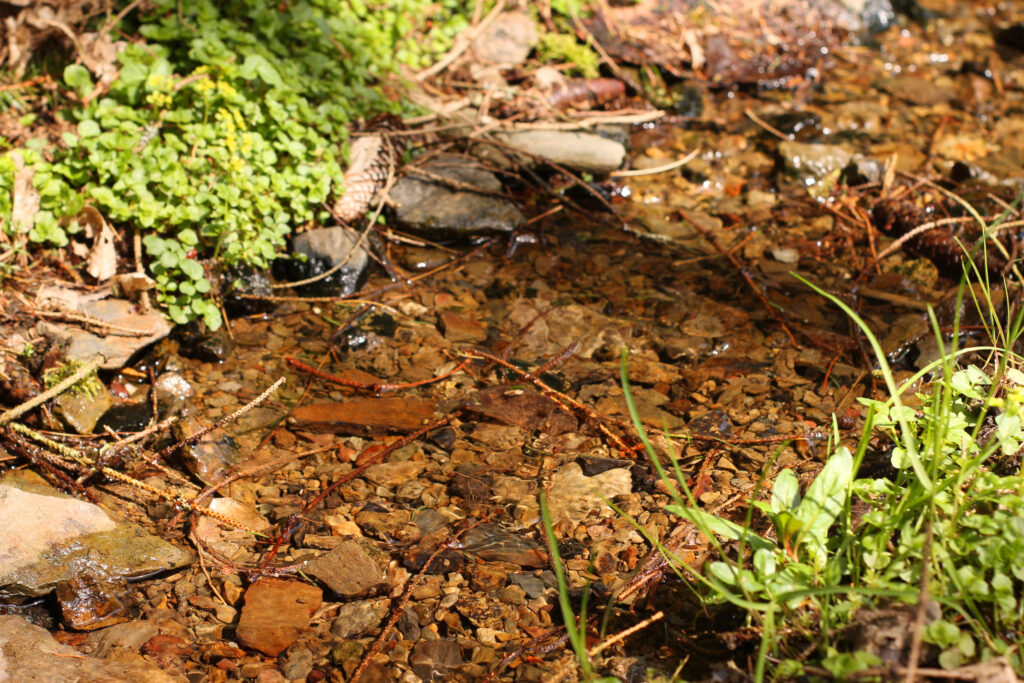 Flaches Gewässer mit geeignetem Bachbett zum Graben.