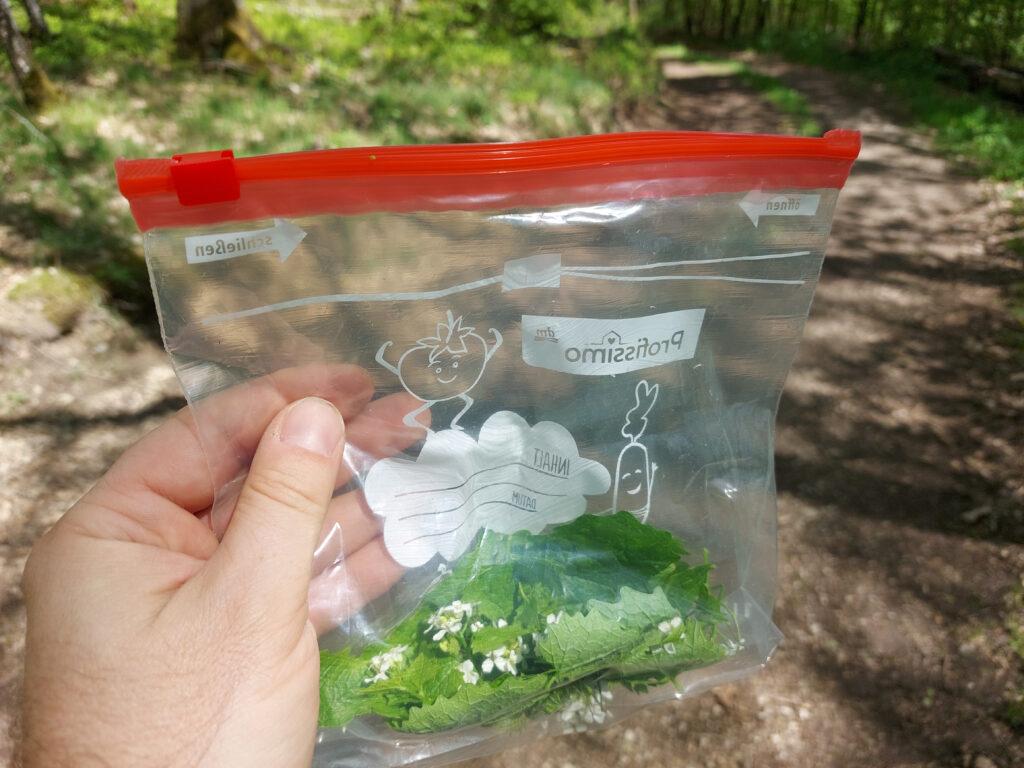 Knoblauchsrauke, Blätter und Blüten in Plastiktüte