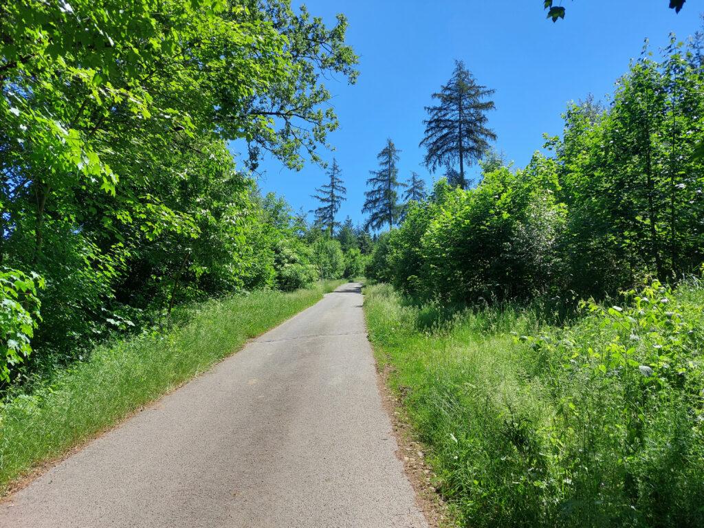 Rothaarsteigzubringerweg in der Nähe von Oberhundem