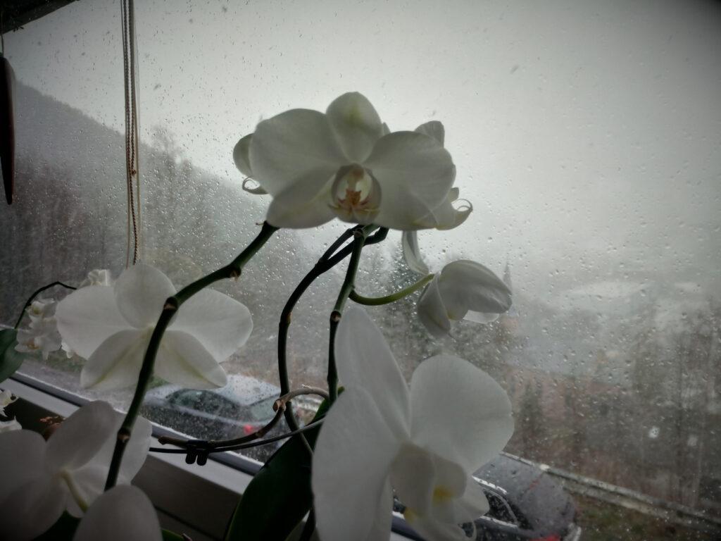 Blick nach draußen durch eine Glasscheibe mit Regentropfen.