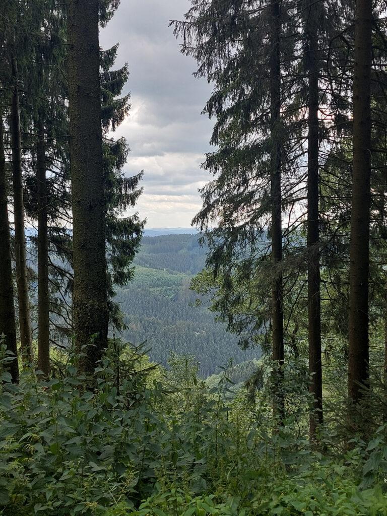 Blick durch eine Baumschneise am Finnentroper Rundwanderweg nahe Wildewiese