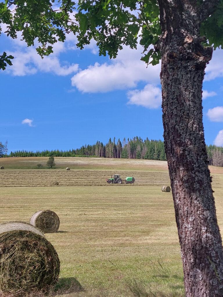 Traktor beim Heuballenpressen auf einer großen gemähten Wiese mit Heuballen und Eiche im Vordergrund.