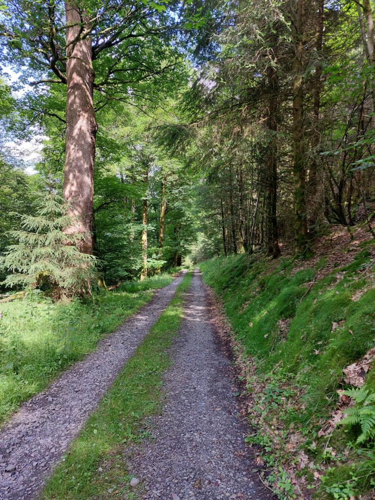Wittgensteiner Panoramaweg. Es geht in den Wald hinab.