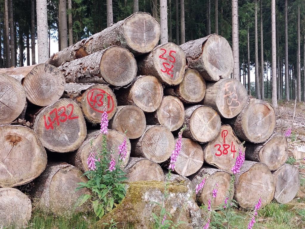 Holzpolter am Wegesrand des Wittgensteiner Panoramawegs