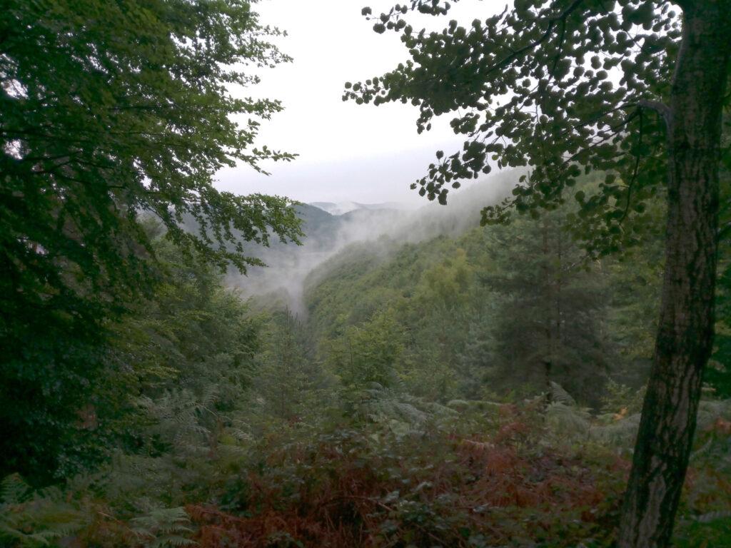 Nebelschwaden in Frankreich auf dem Deutsch-Französischen-Burgenweg