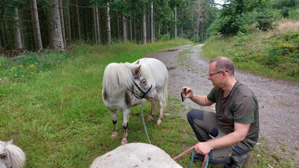 Thomas fotografiert Shettland-Ponys