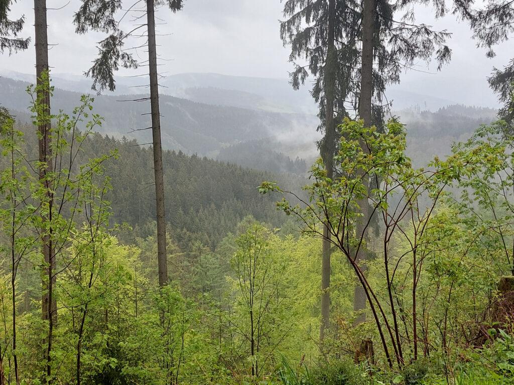 Nebelschwaden im Siegerländer Wald